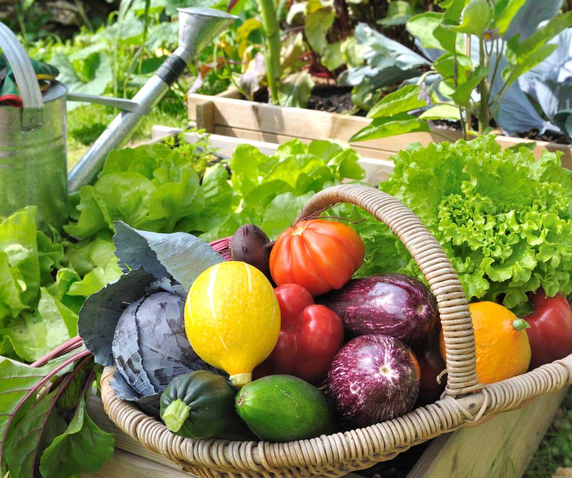 garden basket of fresh vegetables